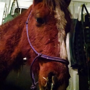 Equine Rescue Urgent Care and Veterinary Fund